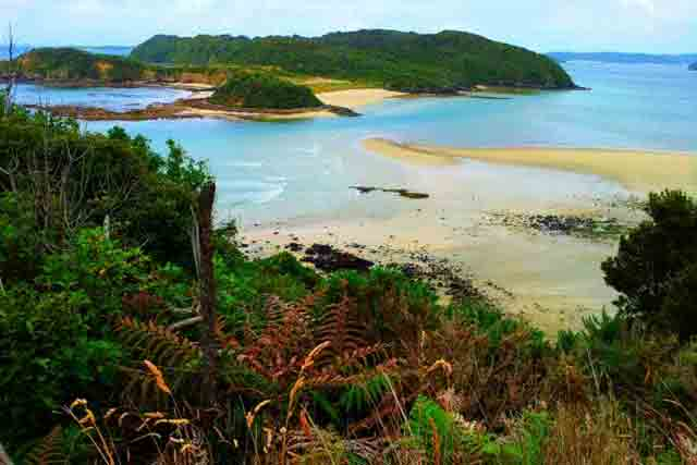 Image of Stewart Island showing a sandy beach and lush trees
