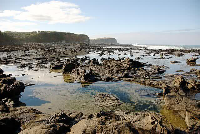 Image of the petrified forest at Curio Bay on the Catlins coast