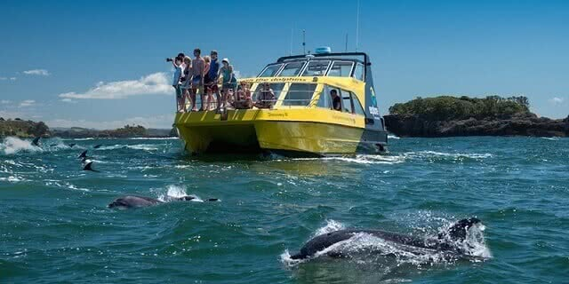 The Explore catamaran takes you out to swim with dolphins in the Bay of Islands